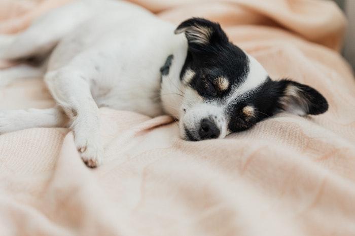 ペット,犬,猫,静電気,対策,乾燥,冬