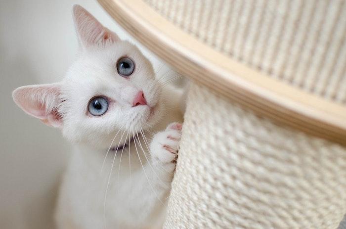 猫ストーカー,猫,ストーカー,ついてくる,心理,理由,トイレ,お風呂