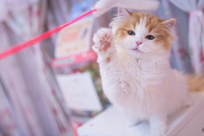 猫,猫パンチ,理由,気持ち,猫の気持ち,爪,前脚,見分け方