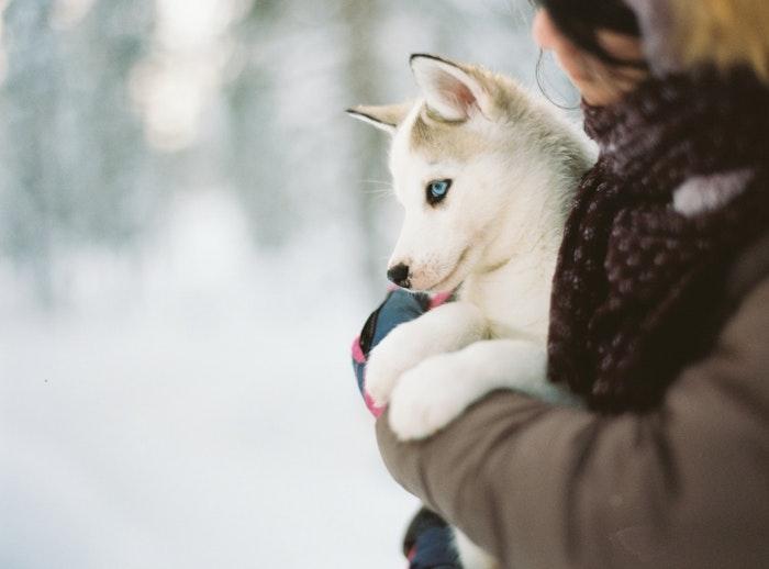 犬 ヒートショック 対策 原因