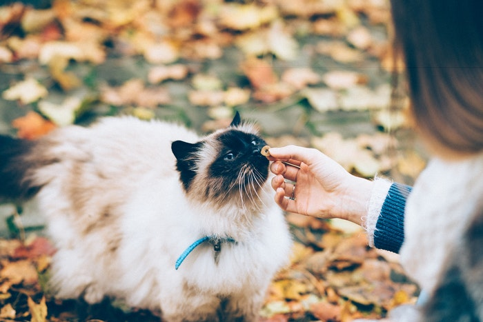獣医 猫 嘔吐 吐出 疾病