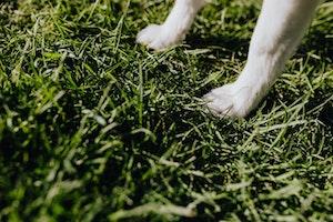 犬,爪,折れる,出血,止血,怪我,傷,お手入れ,爪カット