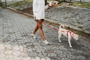 犬,ウンチ,ふん害,自然,環境,破壊,糞尿,散歩,対策,社会的責任,環境的責任,飼い主の責任,マナー