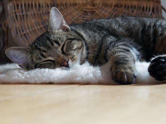 猫,咳,疾患,病気