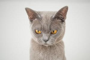 猫,ひげ,感知,センサー,ボディランゲージ,洞毛,触毛,抜ける,猫にきび,猫エイズ,ストレス