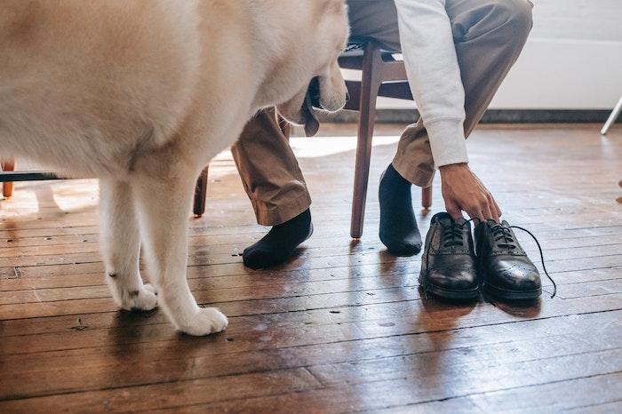 犬,遠吠え,心理,理由,ストレス,認知症