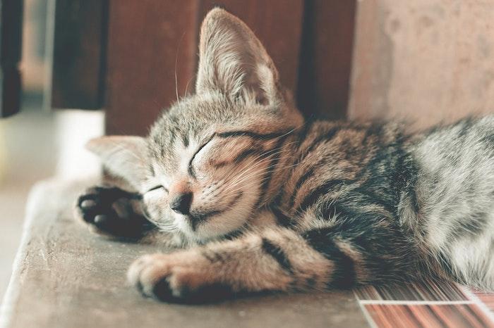 呼吸困難,猫,呼吸,病気,息
