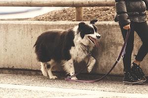 犬,胃捻転,胃拡張,食後,散歩,ガス,早食い,大量食い,ガブ飲み,シニア犬,お腹が膨れる,ゲップ,よだれ,休憩