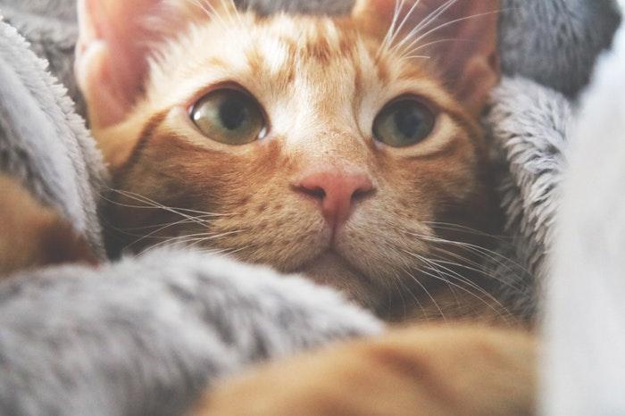 猫,鼻,鼻腔異常,獣医師,鼻汁,鼻血,鼻出血,変形,くしゃみ,病気
