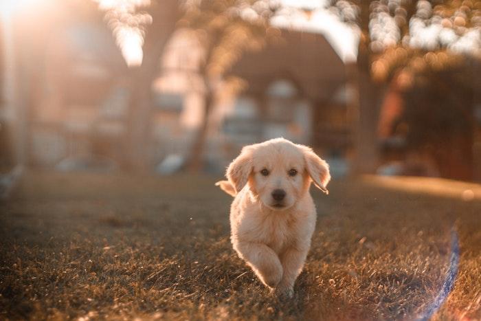 犬,尿,尿もれ,原因,お漏らし,うれション,病気
