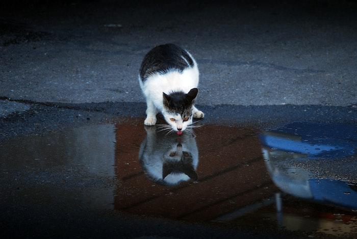 猫,獣医,多飲多尿,病気,健康診断