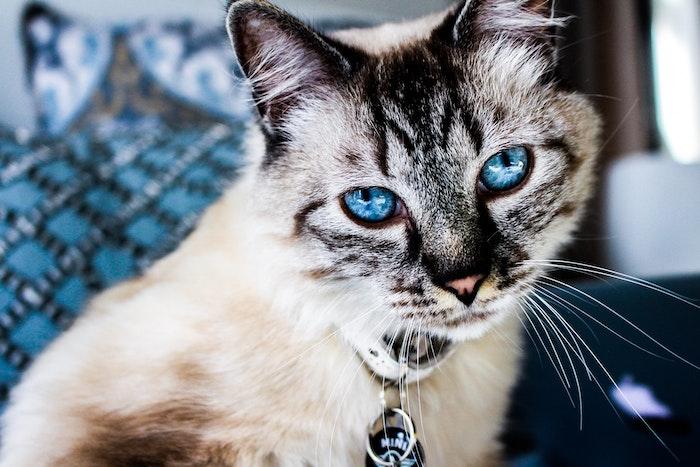 猫,獣医師,眼,異常,疾患