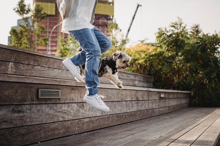 犬,ジャンプ,危険,ケガ,病気,やめさせる,方法