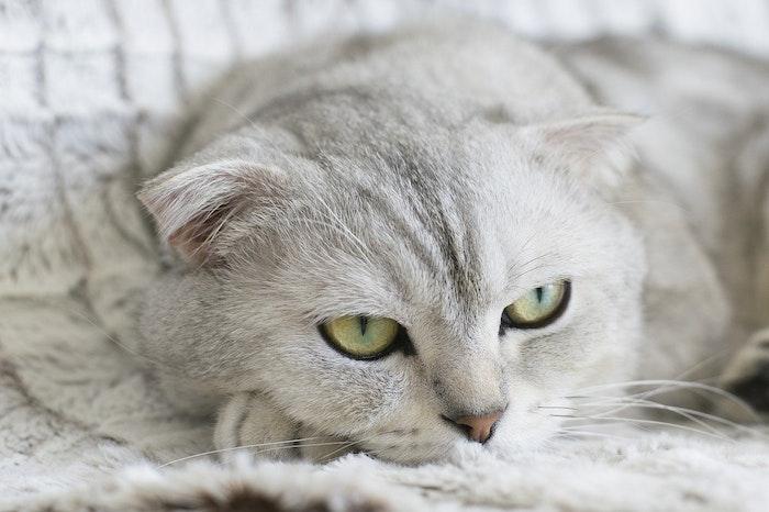 猫,利き手,見分け方,実験,暮らし
