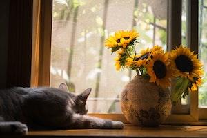 猫,散歩,外,室内飼い,メリット,デメリット,ワクチン,ハーネス,災害,注意,運動不足,ストレス