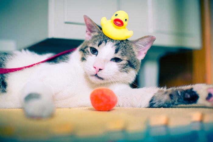 元野良猫,お風呂,シャンプー,タイミング,いつ,手順,ドライヤー,タオル,バスタオル