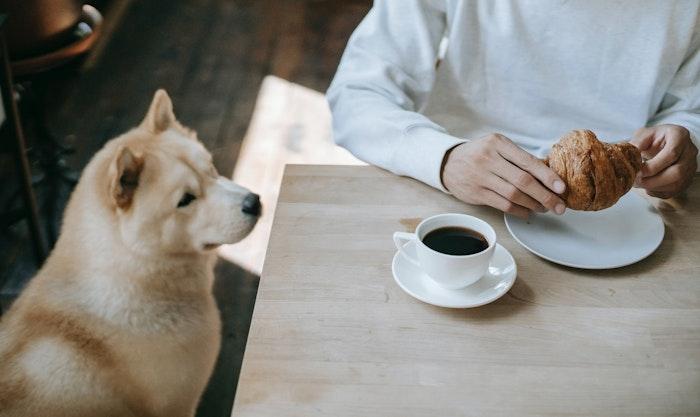 犬,日常,日頃,健康管理,飼い主,体重,食事,家