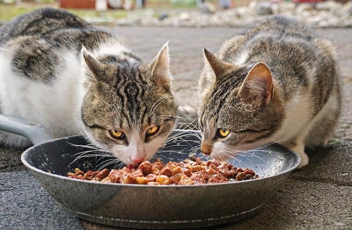 猫,元野良猫,元保護猫,ご飯,水,食べない,理由,原因,ストレス,警戒,