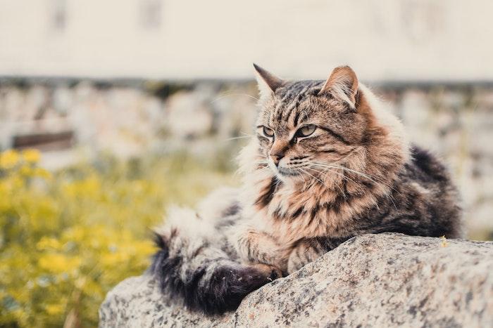 猫,元野良猫,元保護猫,ご飯,水,食べない,理由,原因,ストレス,警戒