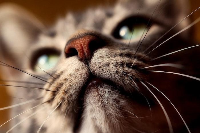 猫,ニキビ,ざ瘡,ストレス,ホルモンバランス,アレルギー,健康,お手入れ