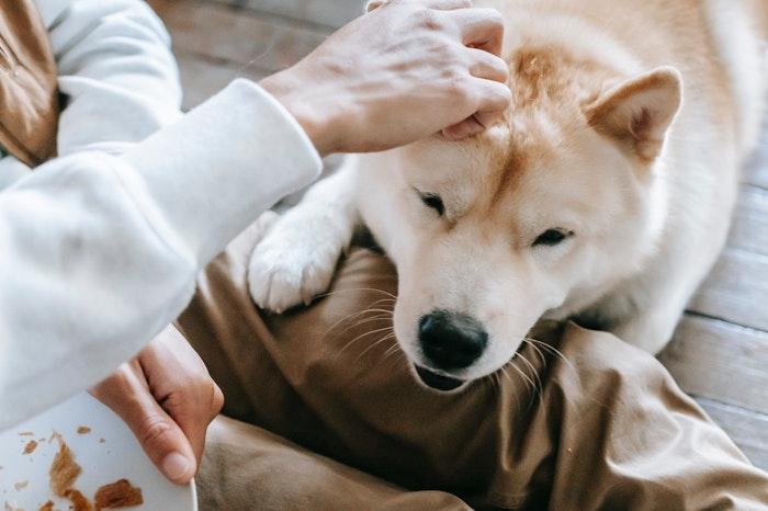 心臓病,心疾患,ペット,犬,猫,食事,療法,管理