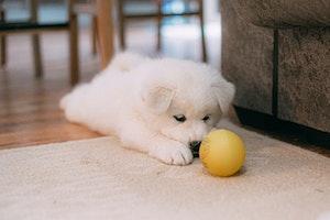 子犬,夜鳴き,不安,寂しさ,環境,ストレス,運動,クレート,ケージ,健康,学習,原因,対策,睡眠