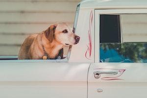 犬,引越,ストレス,環境,変化,吠える,輸送,下痢,対策,健康,ペット