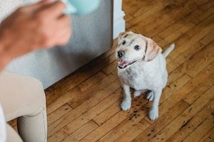 犬,早朝,吠える,対策,理由,原因,近所迷惑