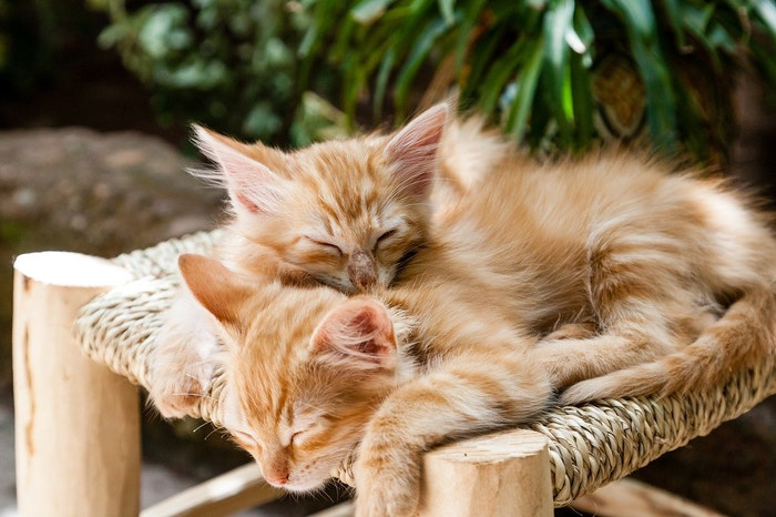 猫,夢,睡眠,寝言,いびき,てんかん,飼い方,暮らし,病気