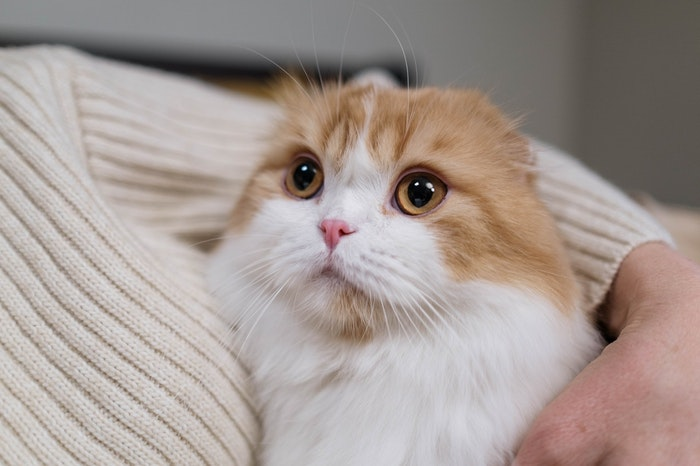犬,猫,先天性疾患,ペット,子犬,子猫,病気,生まれつき