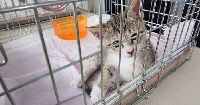 猫,野良猫,保護,飼えない,動物病院,里親,保護団体,SNS,準備,ポイント