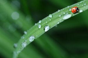 雨,天気,気圧,低気圧,ペット