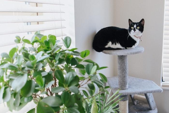 保護猫,外,出たがる,鳴く,原因,対策