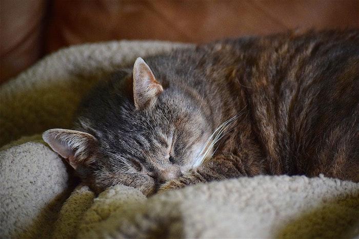 猫,寝る場所,睡眠,寝相,信頼,添い寝