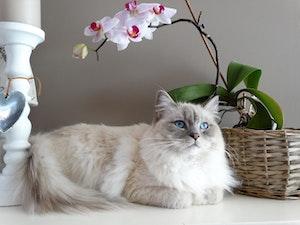 猫,毛色,変化,成長