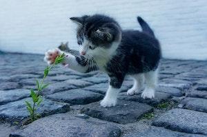 ペット,犬,猫,植物,危険,中毒