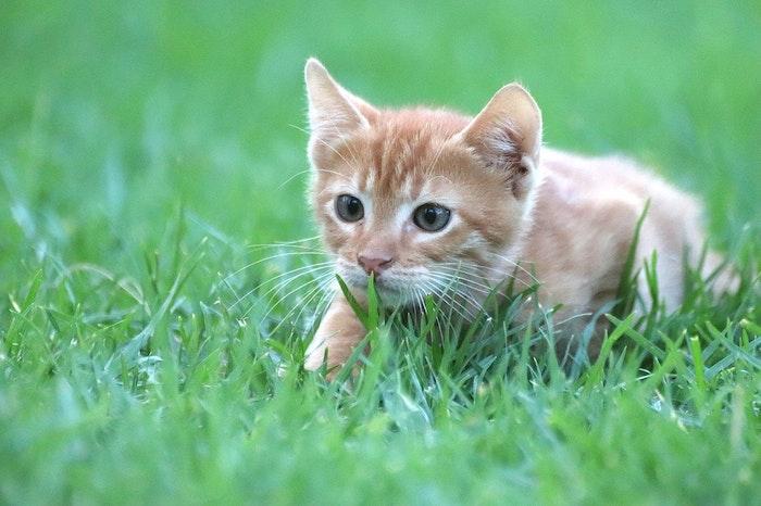 猫,おみやげ,狩り,理由,対処,方法,病気,エキノコックス,トキソプラズマ,回虫症,ネコ条虫