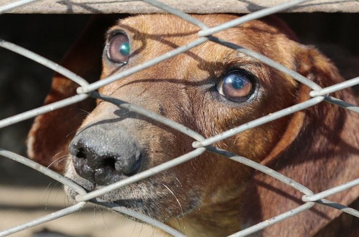 ペット,犬,猫,中国,ネット,通販,宅配,ブラインドボックス,動物愛護