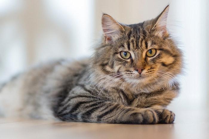 猫,ツンデレ,気分屋,理由,単独行動,時間,季節,発情期,性格