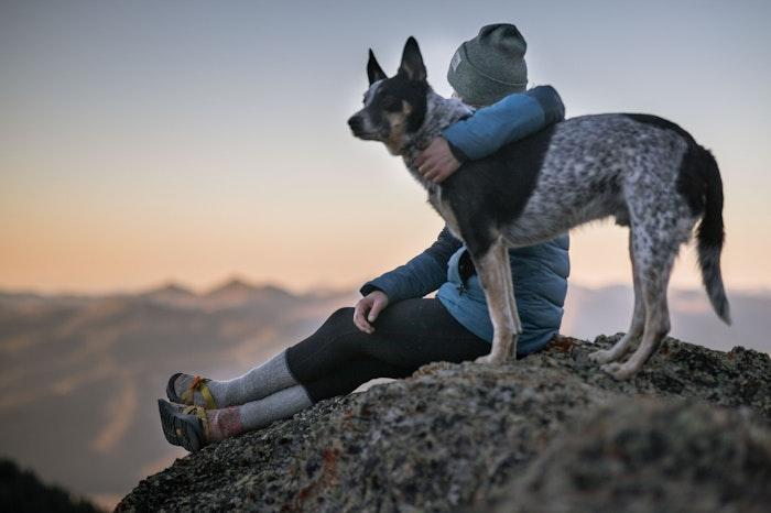犬,顔,表情,性格,似る,飼い主,実験,調査,エンタメ