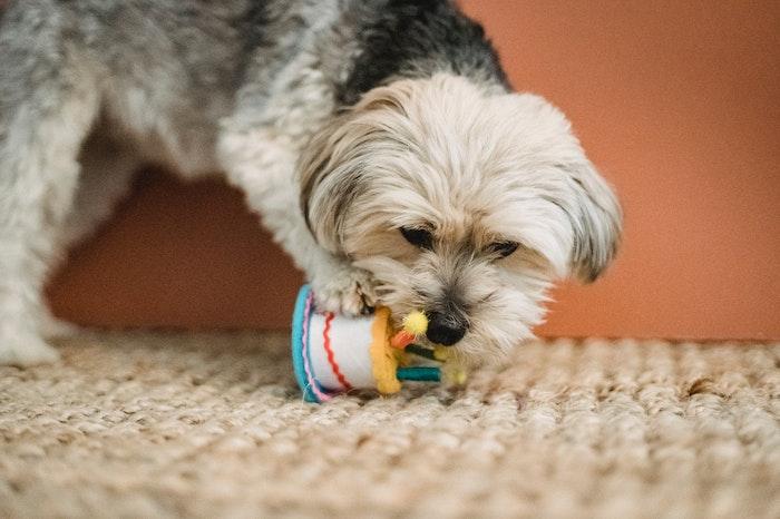 犬,おもちゃ,洗い方