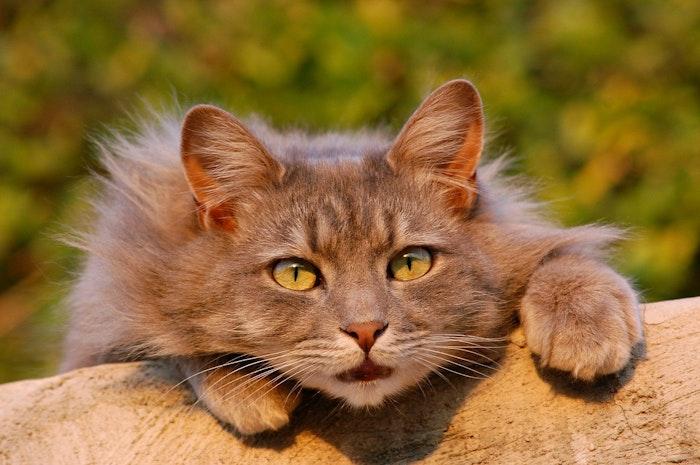 猫,毛繕い,グルーミング,雨,病気,皮膚病,ストレス
