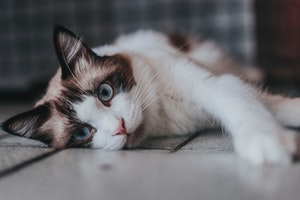 猫,テレビ,見え方,反応