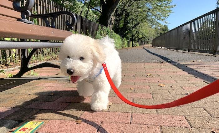 犬,問題行動,本能,幸せ,飼い方,子犬,シェルティ,レトリーバー