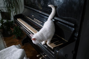 猫,トイレハイ,理由