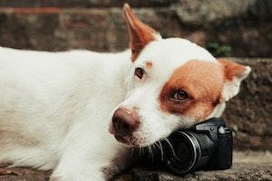 シニア犬,視力低下,サイン,白内障
