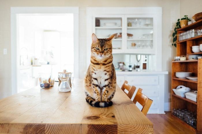 猫,元野良猫,食欲,旺盛,キャットフード,食べ過ぎ