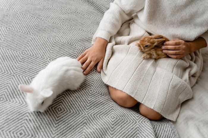うさぎ,しっぽ,役割,取れる,気持ち,触る,お手入れ,裏側,コミュニケーション