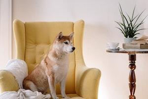 犬,換毛期,ブラッシング