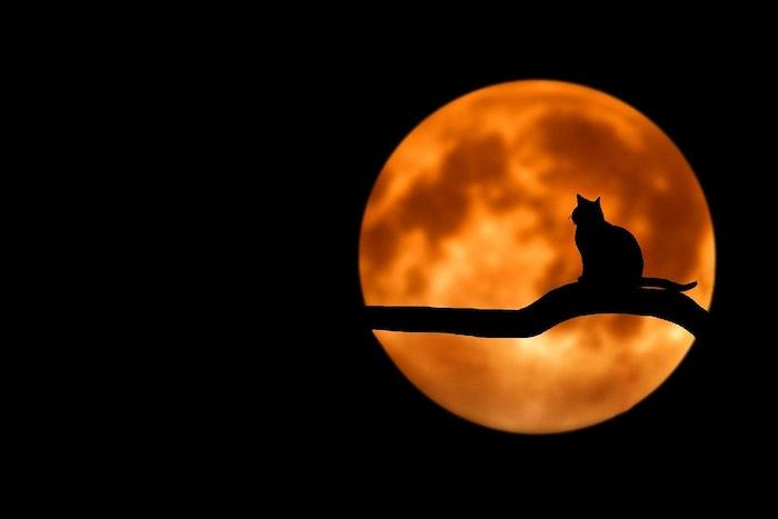 魔女狩り,魔女,黒猫,中世ヨーロッパ,不吉,猫